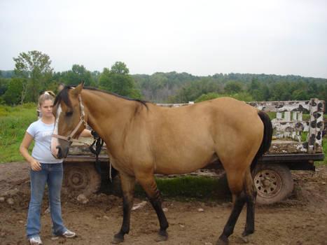 Buckskin horse 1