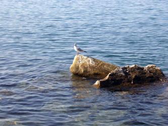 Sea + Rocks XIV by brunilde-stock