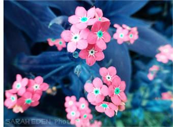 Candy Sprinkles by Eden Kitsch
