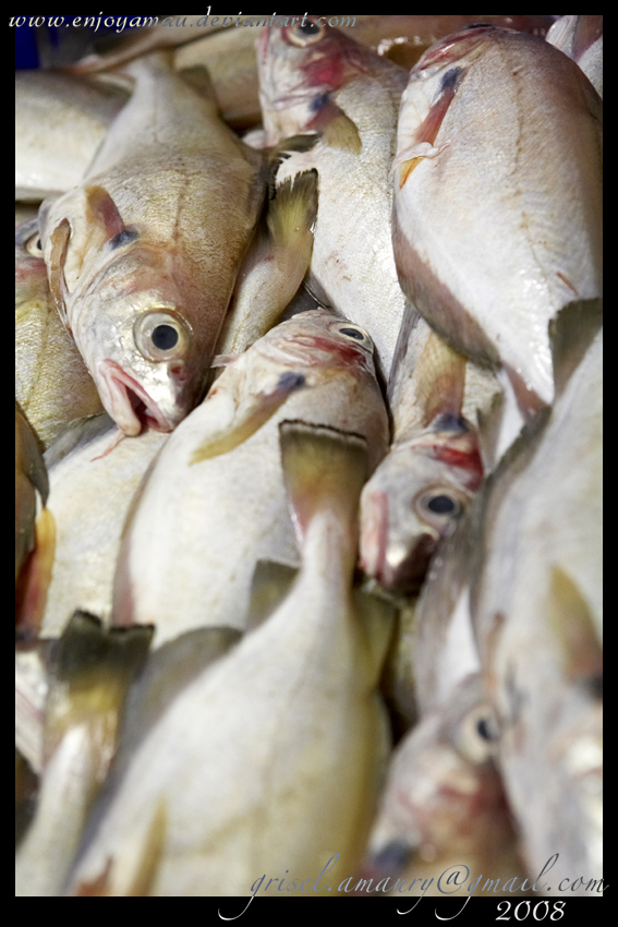 fish by enjoyamau