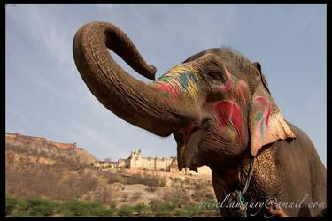jaipur 2006 r by enjoyamau