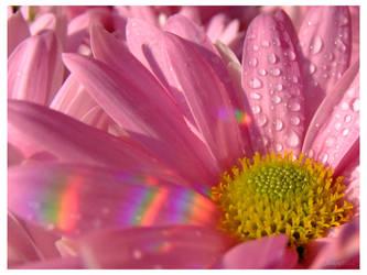 Rainbow Petals by NoisyTart