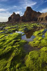 Green velvet by PauloALopes