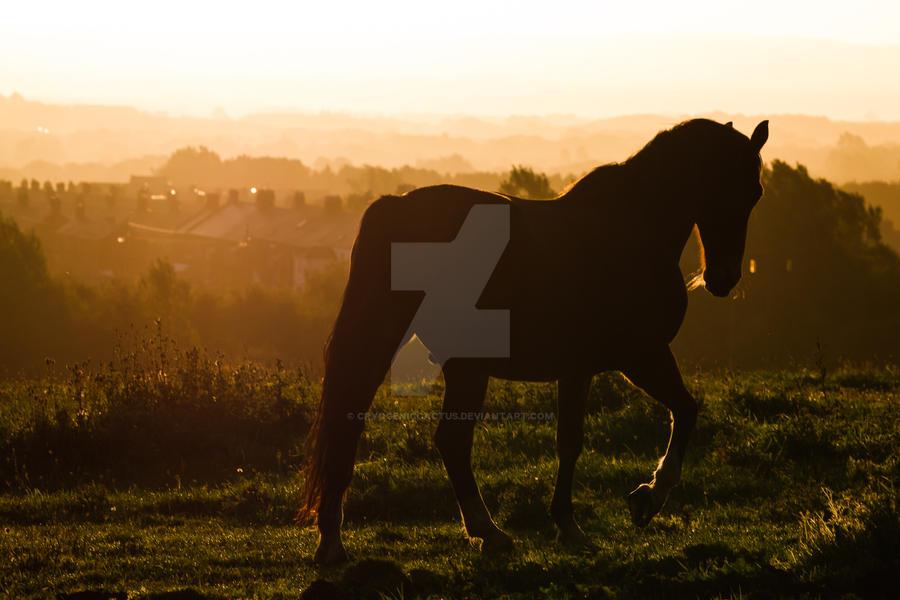 Dark Horse by CryogenicCactus