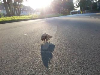 Spaetnachmittaeglicher Igelspaziergang