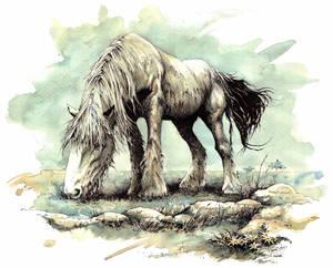 shirehorse
