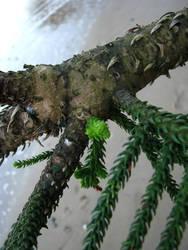 tree in sea 6