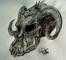 skull study by copperdragon