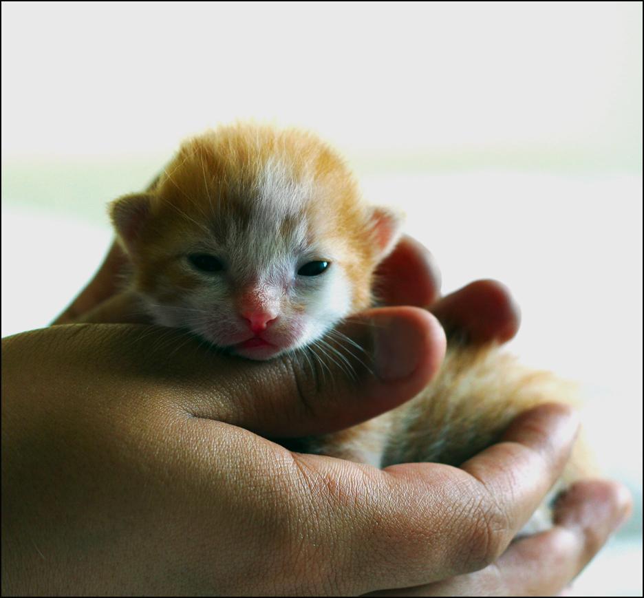 Pin by JoLuxxeDesigns on Cats, Cats, Cats! Newborn kittens