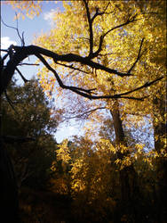Autumnal by mandamick17