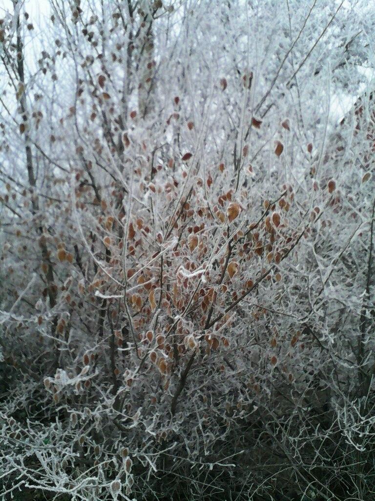 Ice bush by Sibilmor