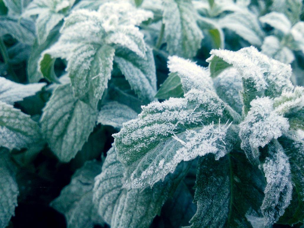 Frosty mint by Sibilmor