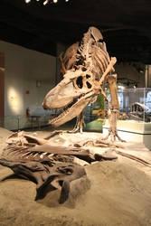 T-rex scavanging a hadrosaur in Chicago by Melusine-Designs