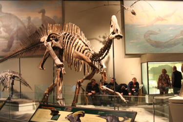 Parasaurolophus at the Chicago Field Museum by Melusine-Designs