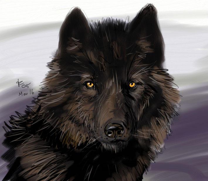 http://fc06.deviantart.net/fs6/i/2005/075/c/3/Black_Wolf_by_rwolf.jpg