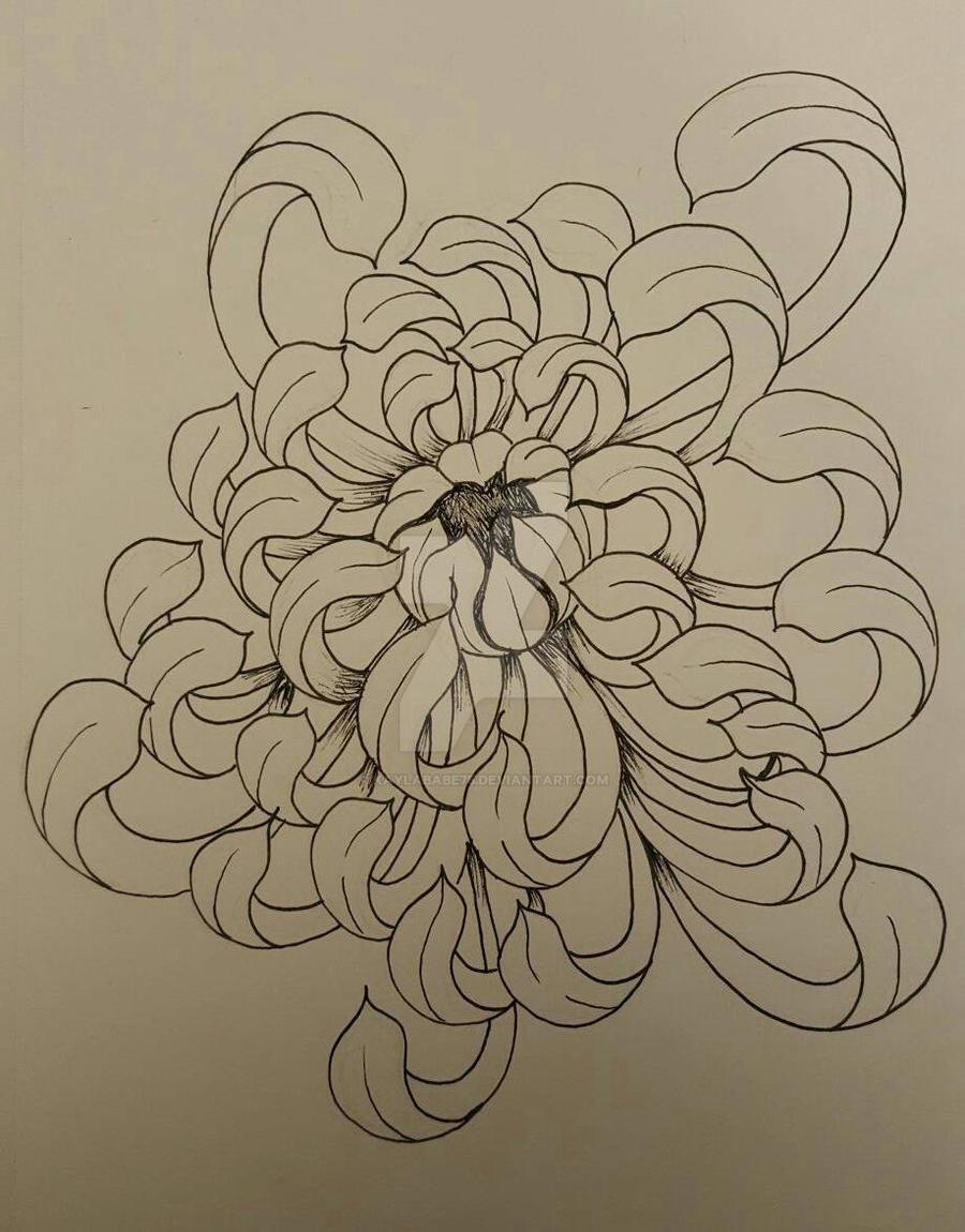 Chrysanthemum Flower Line Drawing : Chrysanthemum flower by kaylababe on deviantart