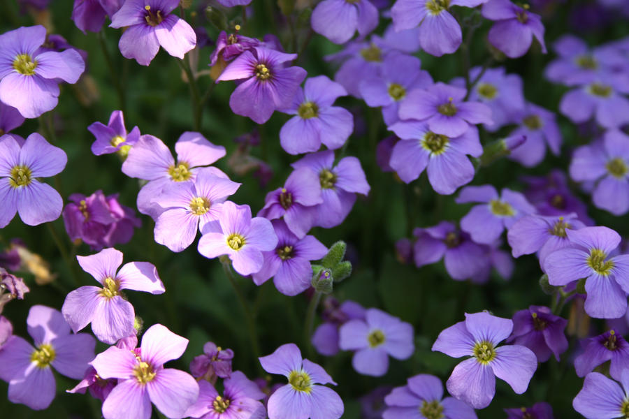Small purple flowers by k o r i i on deviantart small purple flowers by k o r i i mightylinksfo
