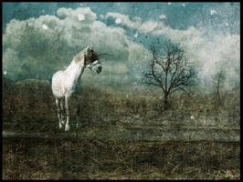 The blind Horse by missmorgue
