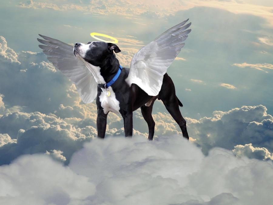 Dog House Wings Menu