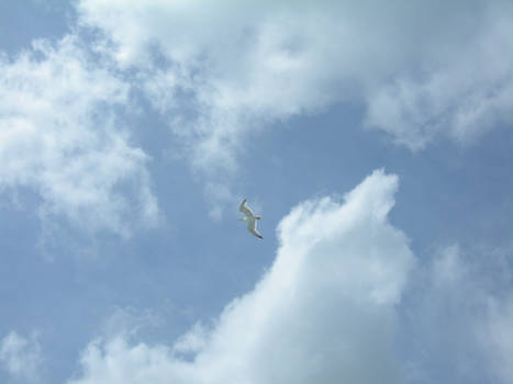 Seagull's fly