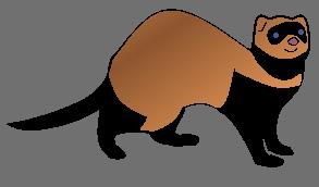 Ferret  by Superiorsound