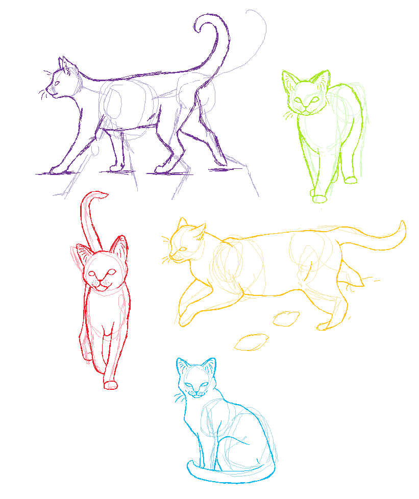 Anatomy practice- Cats by candracar272 on DeviantArt