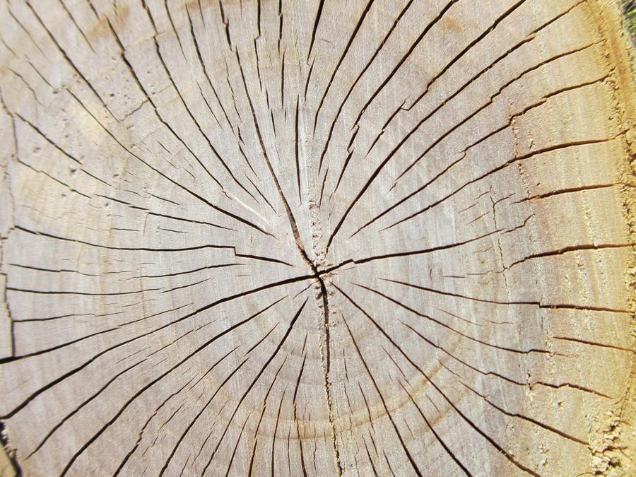 Apple tree stump by Jurv