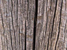 Wood Texture I by poisondropstock