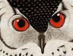 Owl- Request by kerrrriix3
