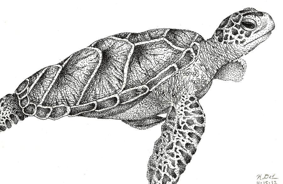Sea turtle drawing - photo#13