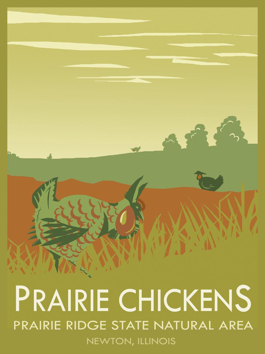 Prairie Chicken Poster by orinocou