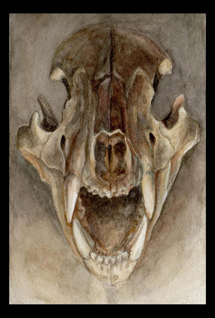 Bear Skull Drawing Bear Skull Drawing