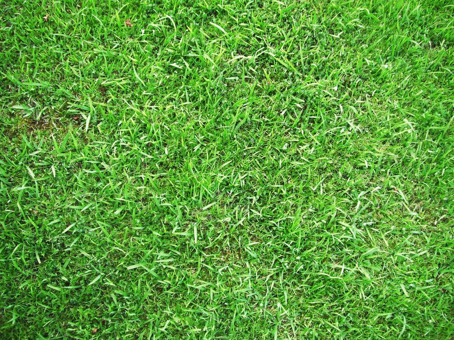 Grass texture. by Heavensinyoureyes