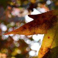 Colours of Autumn. by Heavensinyoureyes