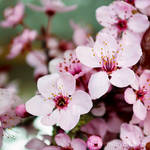 Early spring by Heavensinyoureyes