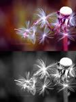 Color theory I by Heavensinyoureyes