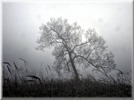November morning... by Yancis