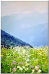 Caucasus mountain meadow...