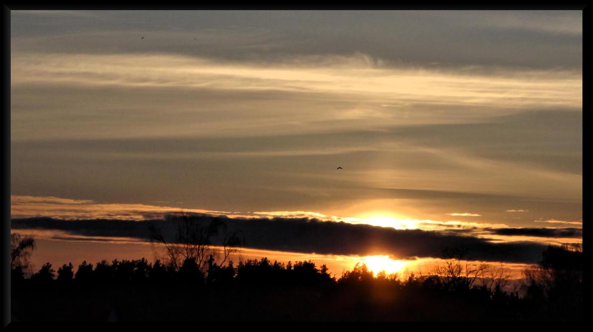 Birds. Enjoying sunset... by Yancis