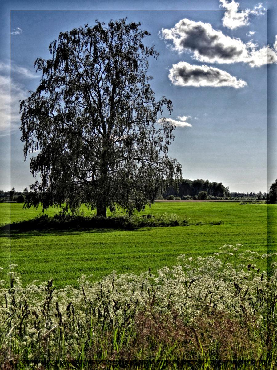 Typical Latvian landscape... by Yancis on deviantART