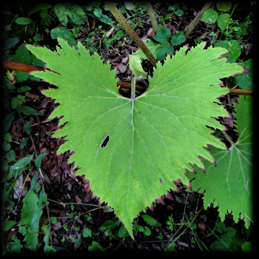 Green heart? by Yancis