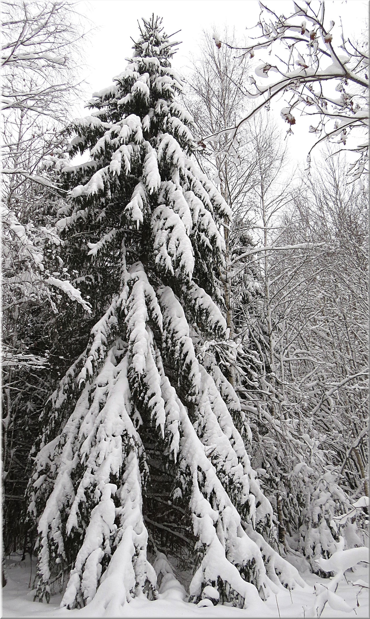 Xmas Tree... by Yancis