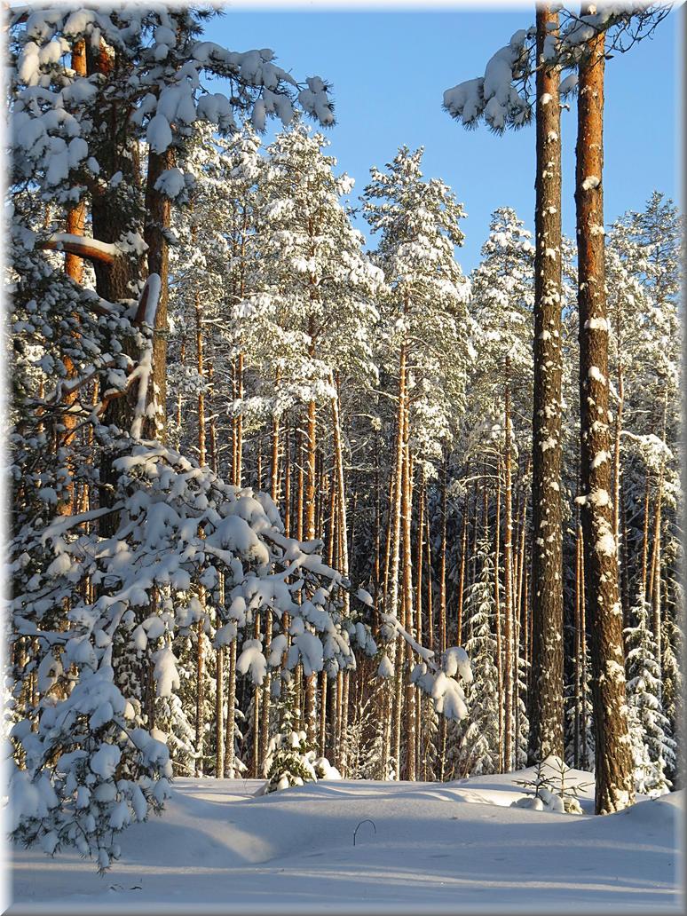 Warm January day... by Yancis