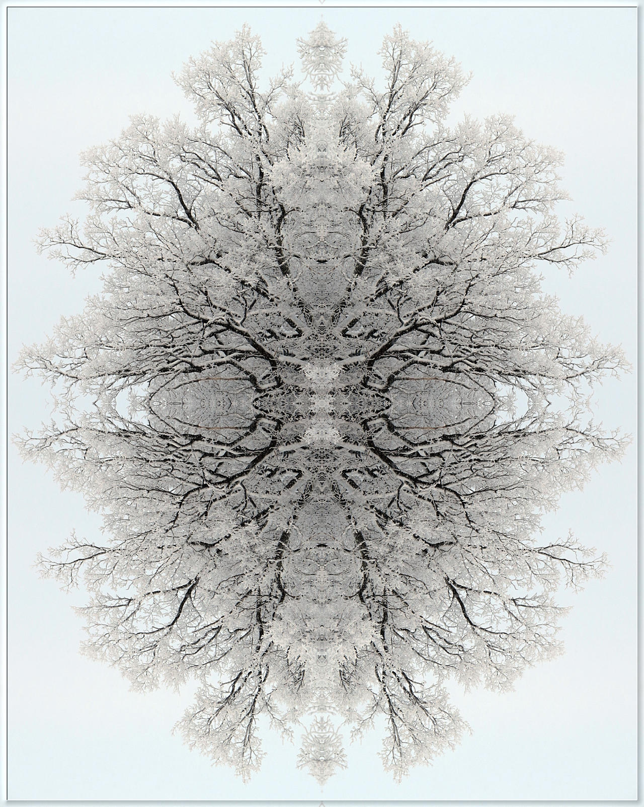 Winter tree... by Yancis