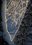 Winter composition...