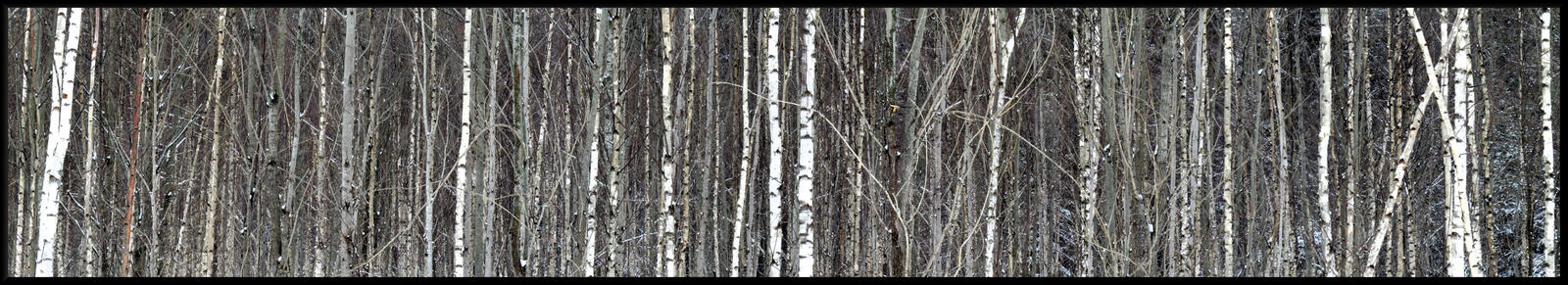Wood. A  lot of wood... by Yancis