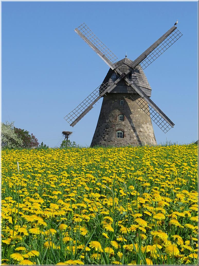 Araisi windmill... by Yancis