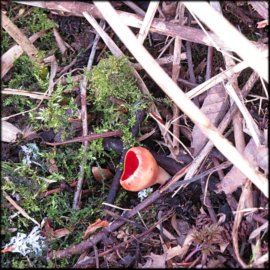 March mushroom... by Yancis