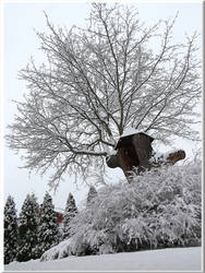 Snow again... by Yancis