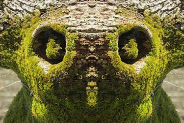 Koala? by Yancis